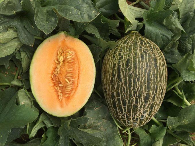 Melón Sorolla, el melón piel de sapo de carne naranja